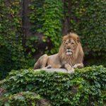 Животные, фотообои в Николаеве