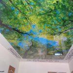fotopechat_les_na_natyazhnom_potolke_v_nikolaeve_mirage